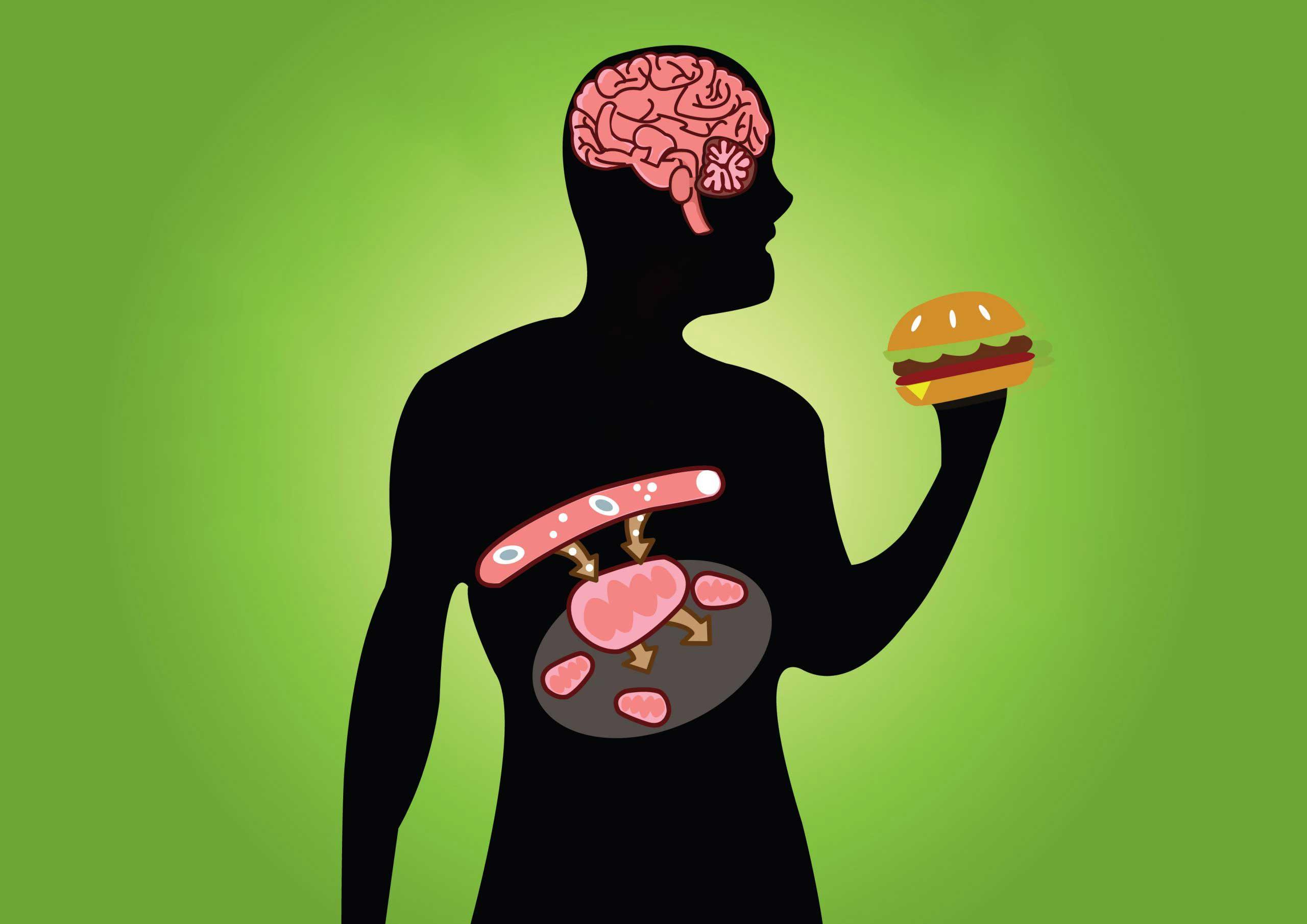 [Прелесть биологии] Метаболический путь глюкозы